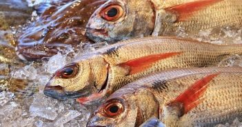 Marseille, poissonniers, poissonnerie